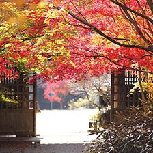 【319】優美な山荘でヤマメ料理を堪能 朝倉の紅葉と逸品めぐり11/29(木)