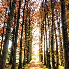 【323】森林浴気分が楽しめる京築エリアへ メタセ並木と森のレストラン11/21(水)