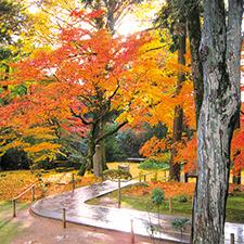 【329】キウイやミカン狩りも楽しめるキウイの里と本坊庭園の紅葉11/22(木)