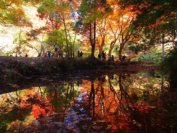 【ハイキング】これからが見頃!養老・梅ヶ瀬渓谷の絶景紅葉スポット紹介