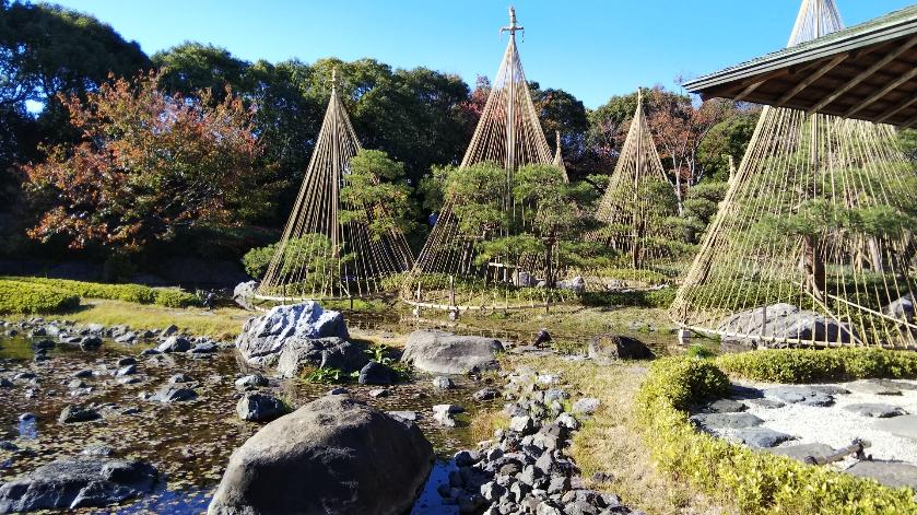 【名古屋最大級の日本庭園】白鳥庭園で紅葉を楽しむ♪