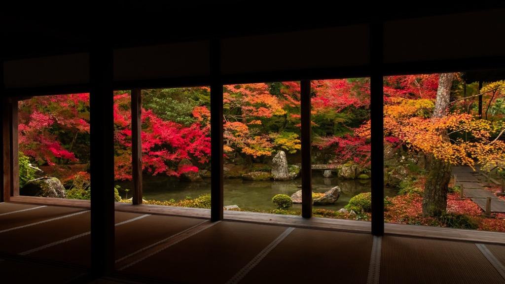 京都の紅葉もいよいよ終盤です♪