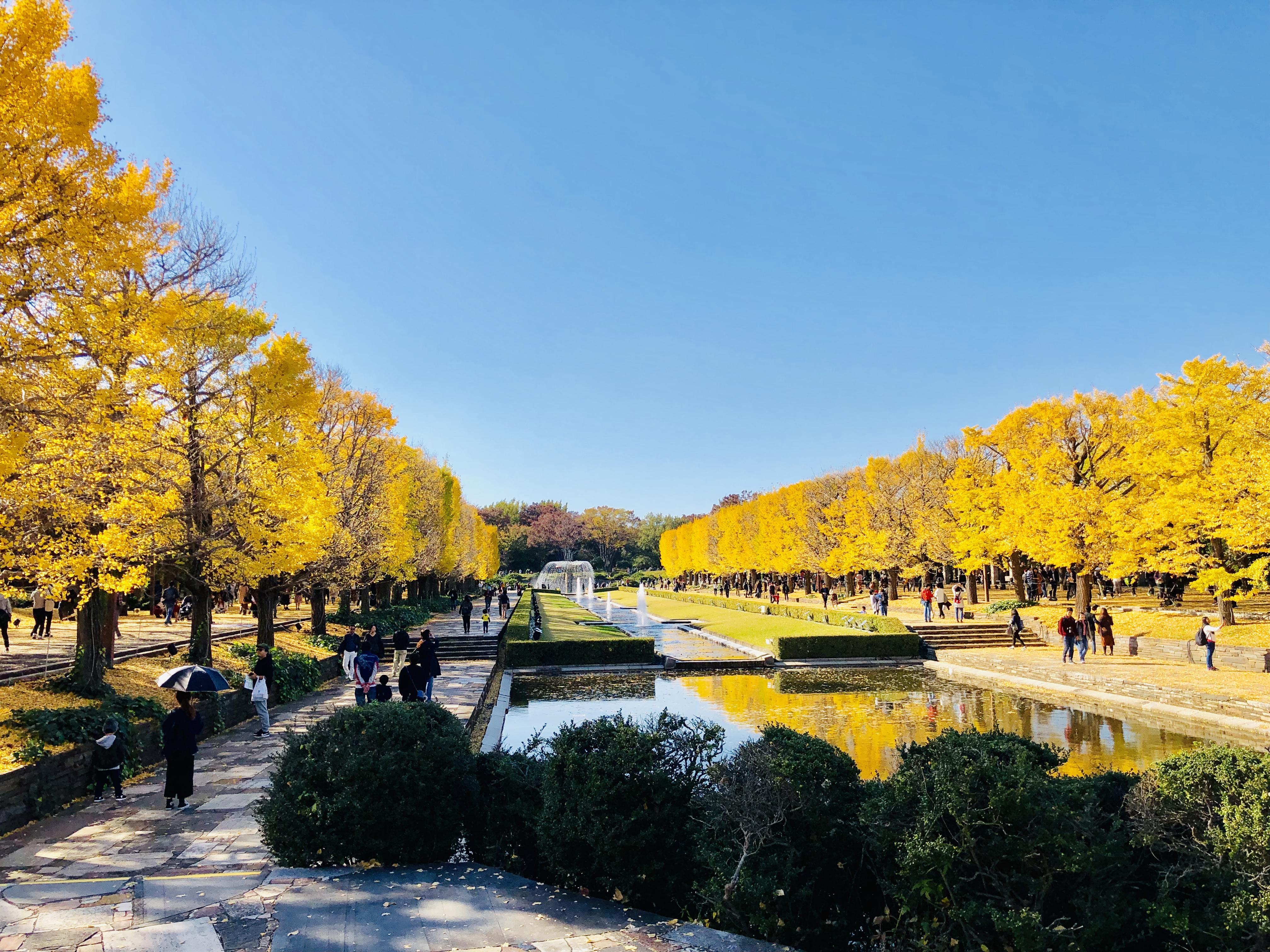 癒し効果抜群☆秋の昭和記念公園で紅葉サイクリング