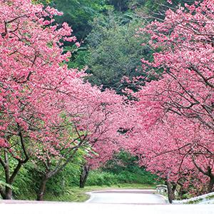 【342】人気バスガイドと行く桜の沖縄2019年1/28(月)~2泊3日※残席わずか