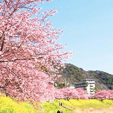 【390】春を先取り!河津桜を愛でる伊豆の旅2019/2/26(火)~28(木)※残席わずか