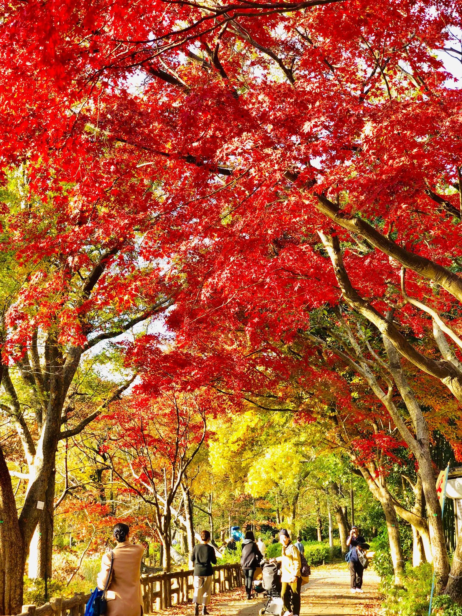 秋の終わりの井の頭公園を散策☆