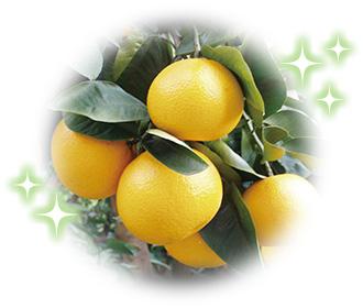 和歌山県産フルーツ