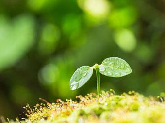 【ココロの扉を開く心理テスト】今、芽吹いたばかりの小さな若葉。さて、どんな風に育つでしょう?