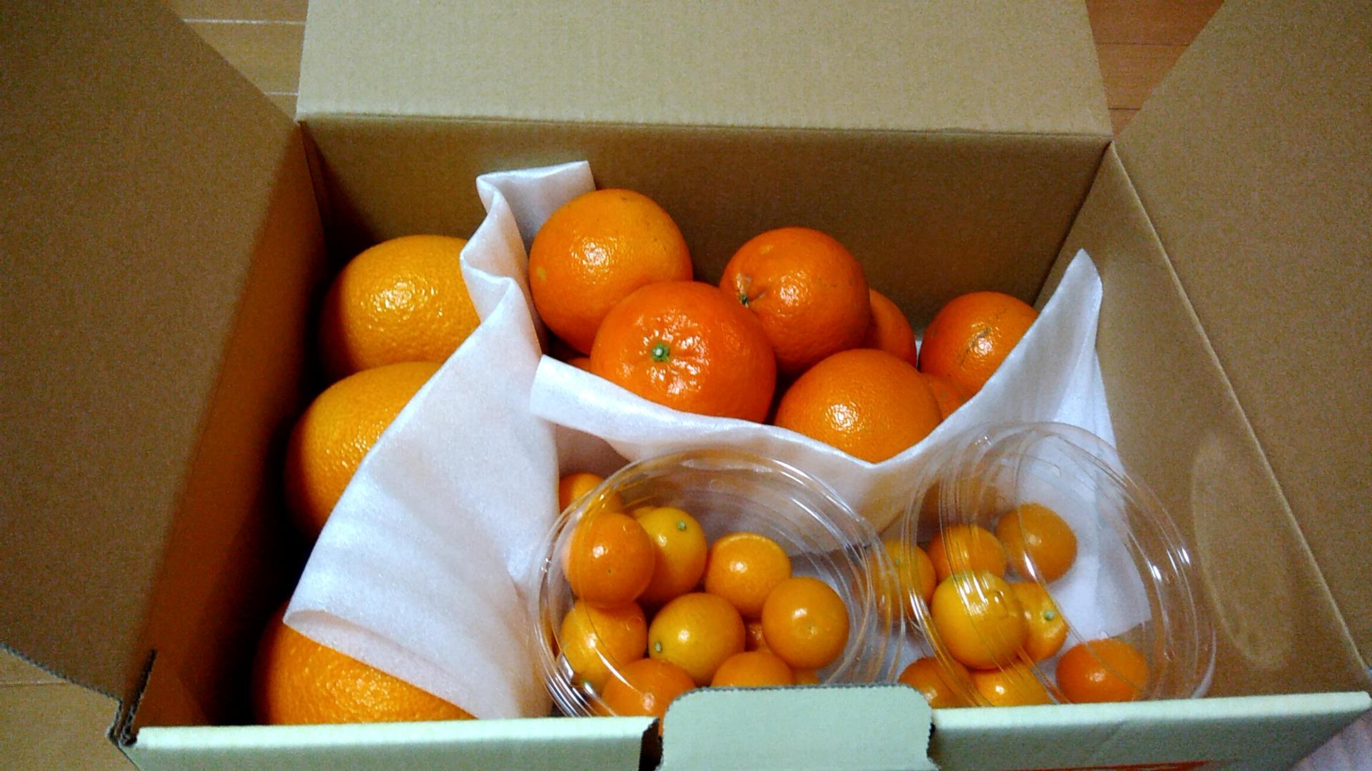 【ふるさと納税】南九州まんぞく定期便3回目は柑橘類詰め合わせ♪