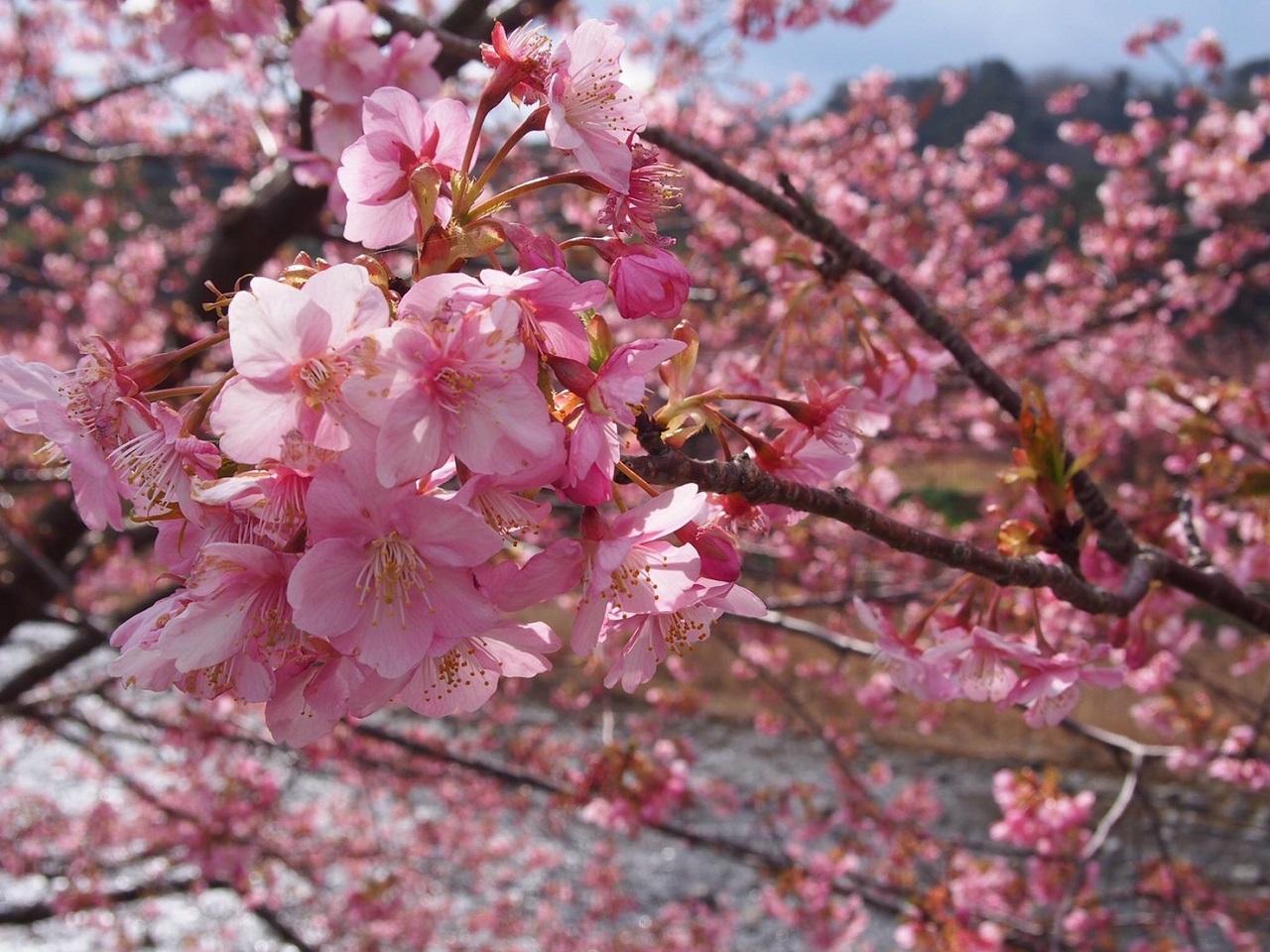 お花見と一緒に楽しめる! お菓子・食品の工場見学3選