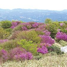 【002】九州百名山を歩く(8)春の山野草咲く井原山4/23(火)