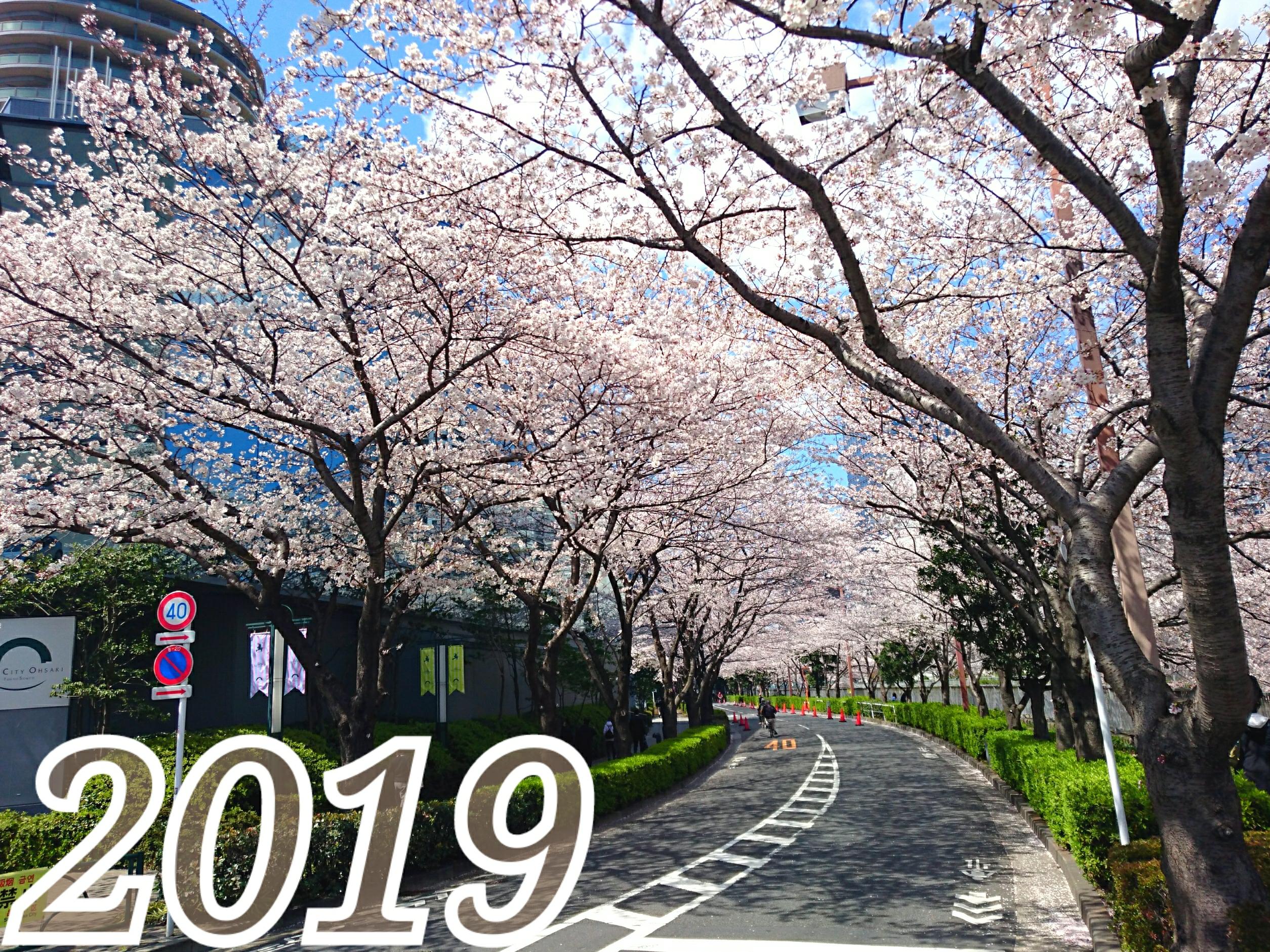 東京桜だより♡2019