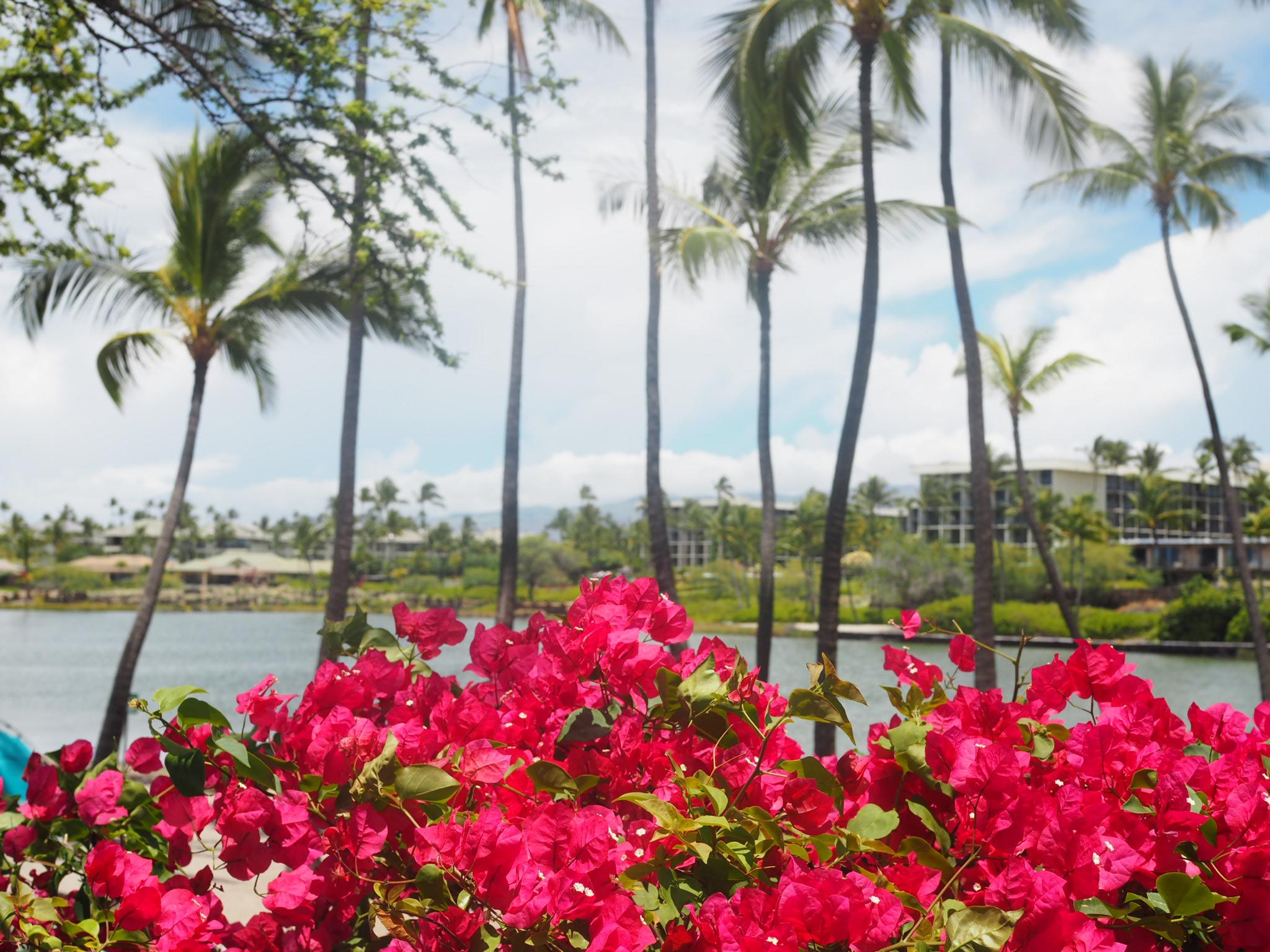 ハワイ島行ったらココ!パート②エメラルドグリーンに輝く人気のビーチへ☆