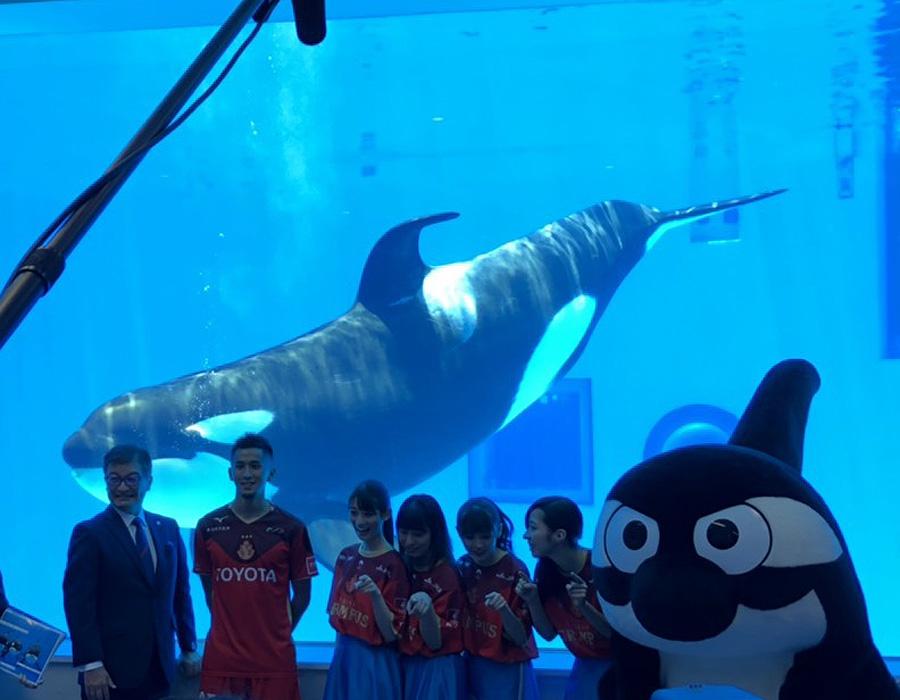 今夏名古屋はシャチ一色!グランパス×名古屋港水族館「シャチに夢中」イベント開催