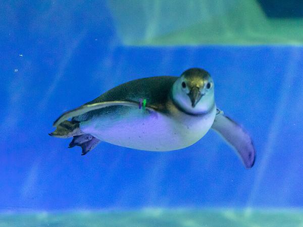 【有休のススメ】眺めて食べて…癒やしの水族館で元気チャージ編