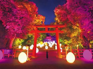 【京都】出町柳・下鴨神社「下鴨神社 糺の森の光の祭 Art by teamLab - TOKIO インカラミ」