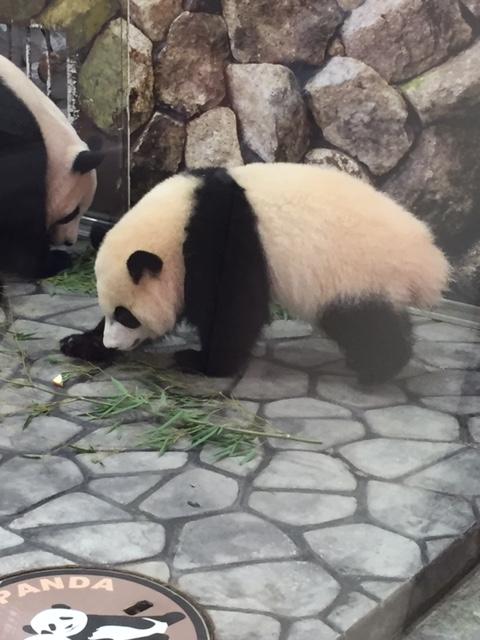 【和歌山('●ω●)】パンダと梅の旅