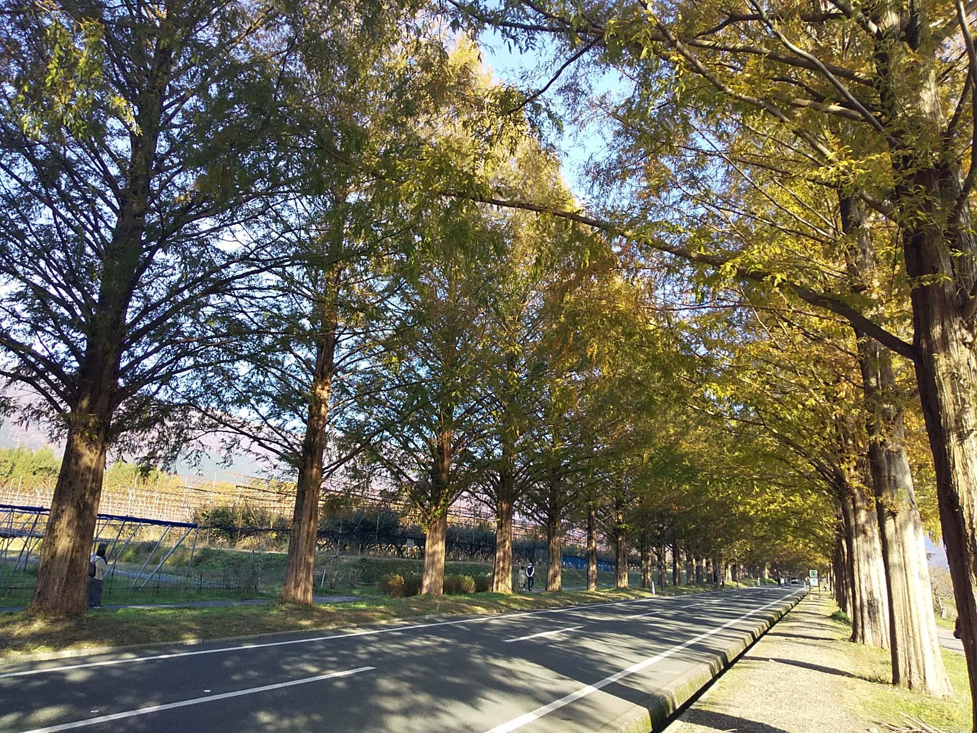 映画のワンシーンみたい!美しすぎる並木道 in 滋賀県