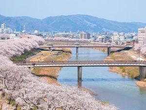 【編集部ブログ〈大阪〉】春の福井はさくら色に染まります!